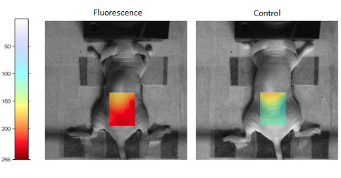 hybrid fluorescence-ultrasound small animal imaging system in mice